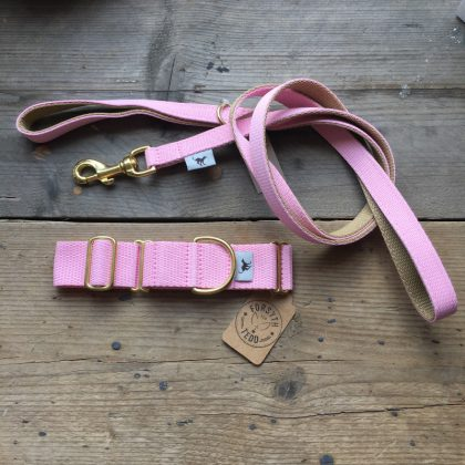 Dog collars and dog leads from Forsyth and Tedd