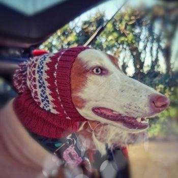 dog hat from Forysth and Tedd