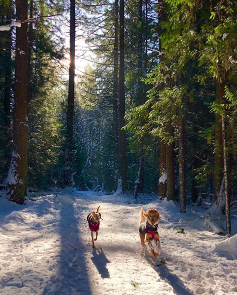 Dogs in coats running in a snowy wood