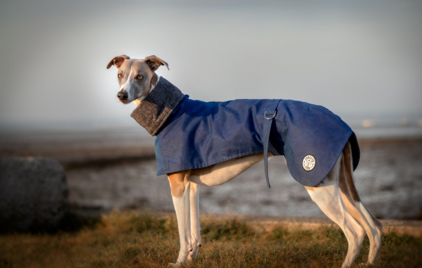 Wax Dog Coats from Forsyth and Tedd