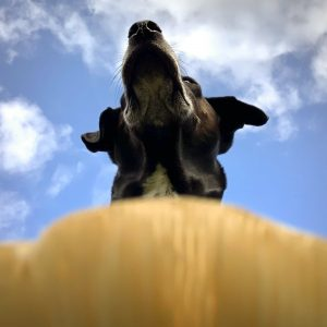 Composition Photographing your dog