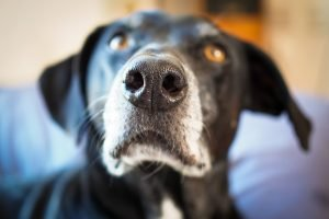 Focus Photographing your dog