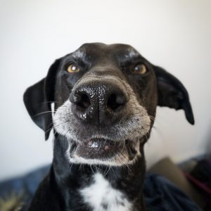 Fun with your dog Photographing your dog