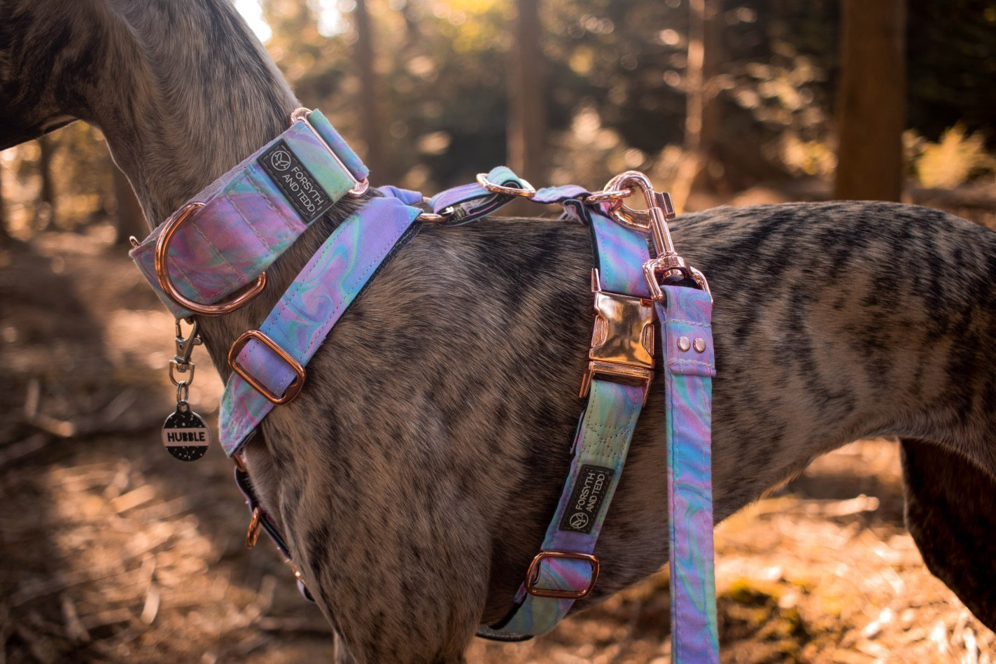 Dog Harness from Forsyth and Tedd