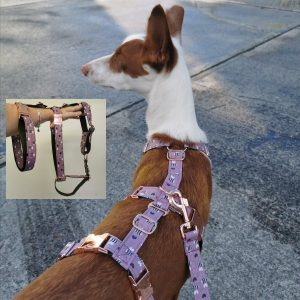 Dog Houdini Harness from Forsyth and Tedd