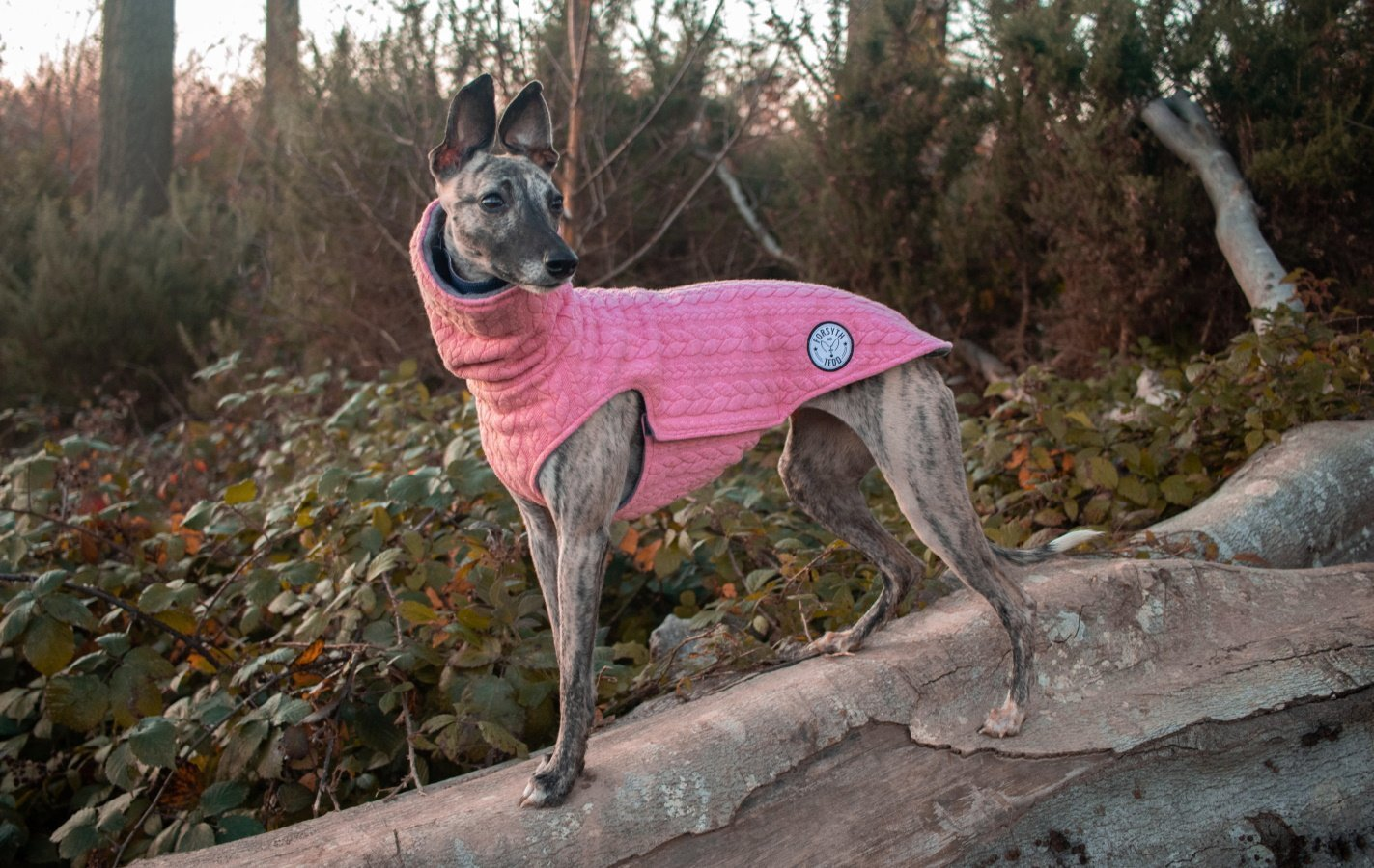 Cable Knit Dog Jumpers from Fosyth and Tedd