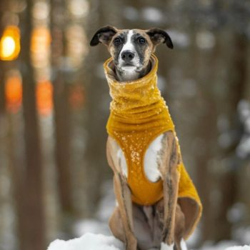 Sighthound Jumpers