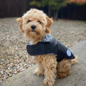 Dog coats from Forsyth and Tedd
