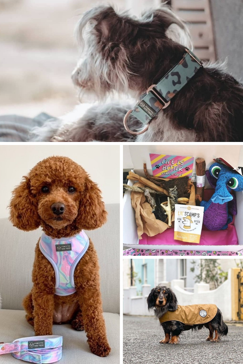 Dogs on holiday wearing nice collars, coats and treats