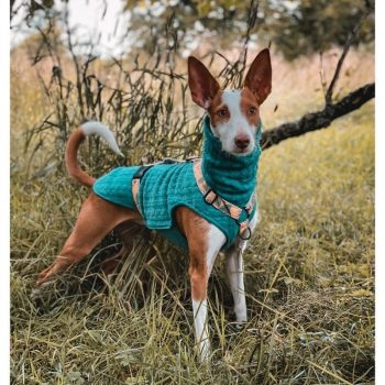 Sighthound Collection